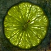lime-disease