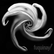 datura-dark-pinwheel-bw